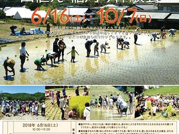田植え・稲刈り体験会